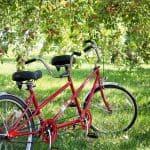 tandem bike bicycle apple orchard