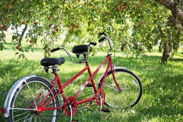 tandem bike bicycle apple orchard